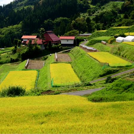 景观田园案例